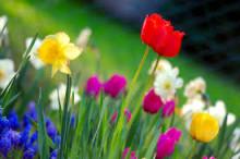 garden planting services