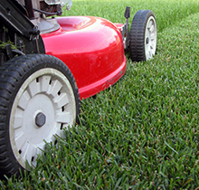 Hire a Professional for Your Lawn Care