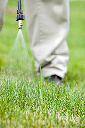 Lawn Weed Killer & Removal Services