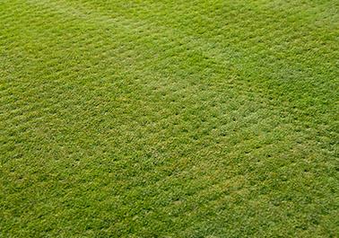lawn-aeration-2