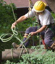 Toronto Tree Removal & Cutting Services