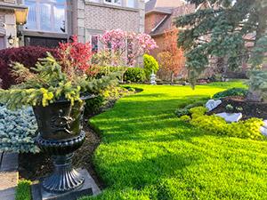 Professional Landscape Services