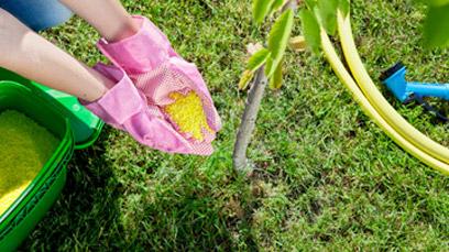 Tree Fertilizing