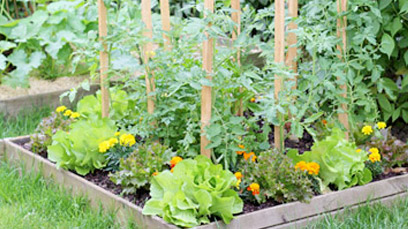Vegetable and Herb Gardens