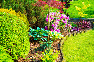 Top 5 Landscaping Tips to Save Money