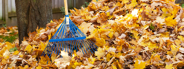 fall-cleanup-pack