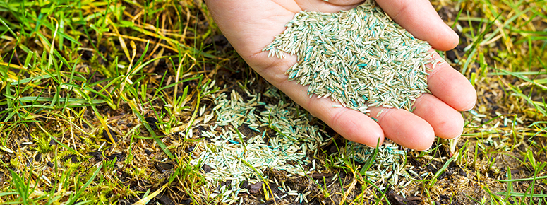 lawn-seeding-pack