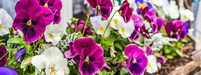 spring-planter-pack