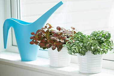 watering-pic-top-left