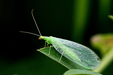 Beneficial Insects for Pest Control