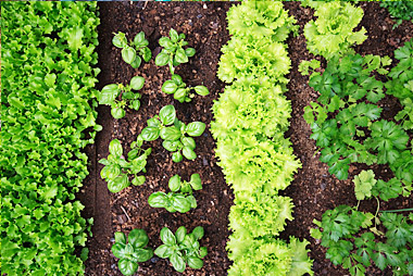 companion-planting-pic-2