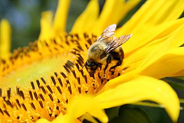garden-pollinators-left