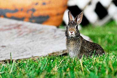 How to deter animals from your garden greenbloom for How to deter rabbits from garden