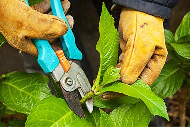 pruning-pic-1