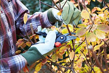 pruning-pic-2