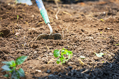Important and How Soil Cultivating and Tilling |