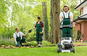 Common Landscape Maintenance Myths to Stop Believing Now
