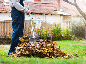 Fall Cleanup