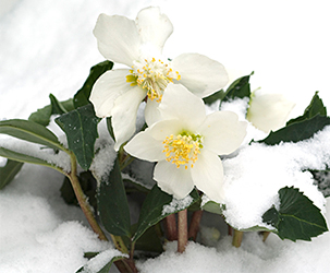 Useful Tips to Create the Perfect Winter Garden