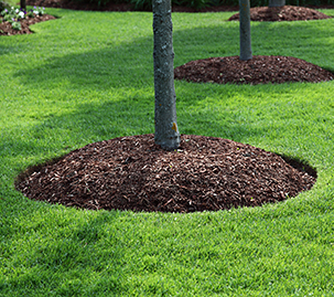 Your Ultimate Guide to Lawn Fertilizer Service